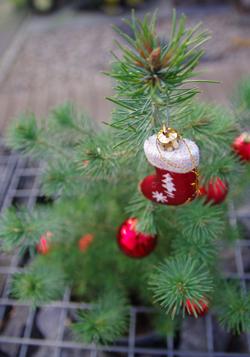 Weihnachtsgrüße HATV-Präsidium
